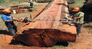 صور صناعة الخشب من الاشجار , استخدام الشجر لعمل الخشب