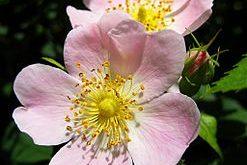 صورة من الزهور من خمس حروف , اذكر اسم زهرة من خمسة احرف