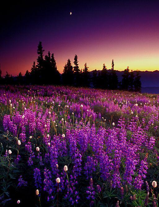 صور مناظر طبيعية خلابة صور خلفيات طبيعيه جميله اعتذار و اسف