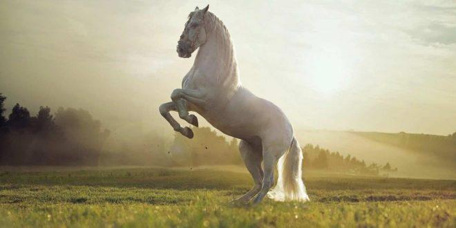 صور تفسير الخيل في الحلم , هل الحصان في المنام خير ام شر