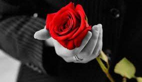 صورة احلى ورده حمراء , اجمل طريقة للتعبير عن المشاعر