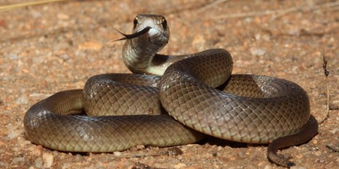 صور معلومات عن الثعابين , حقائق عن الافاعي لا تعرفها من قبل