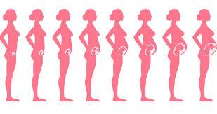 صورة مراحل نمو الجنين داخل الرحم , اربعين اسبوعا داخل رحم الام