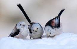 صورة خلفيات طيور متحركة , الطيور بالوانها احلى في خلفيتك