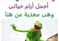 صورة مواقف مضحكة جدا جدا جدا 2019 للكبار فقط , مش هتبطل ضحك