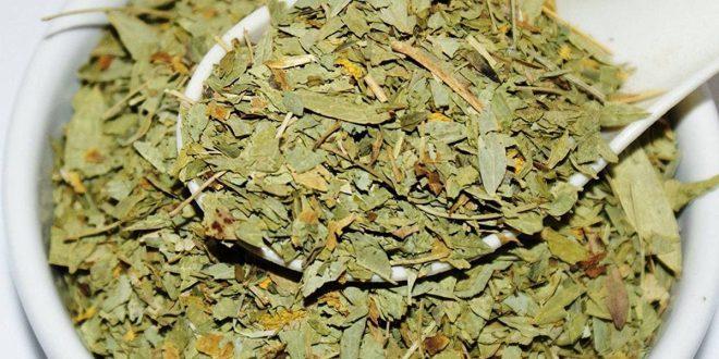 صور فوائد عشبة السنامكي , طريقة استخدام العشبة