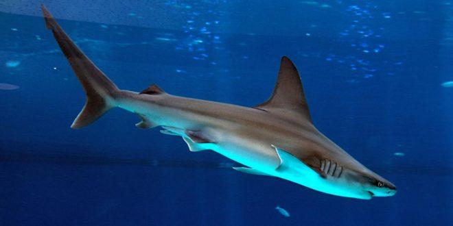 صور تفسير حلم سمك القرش , هل سمك القرش خير في المنام