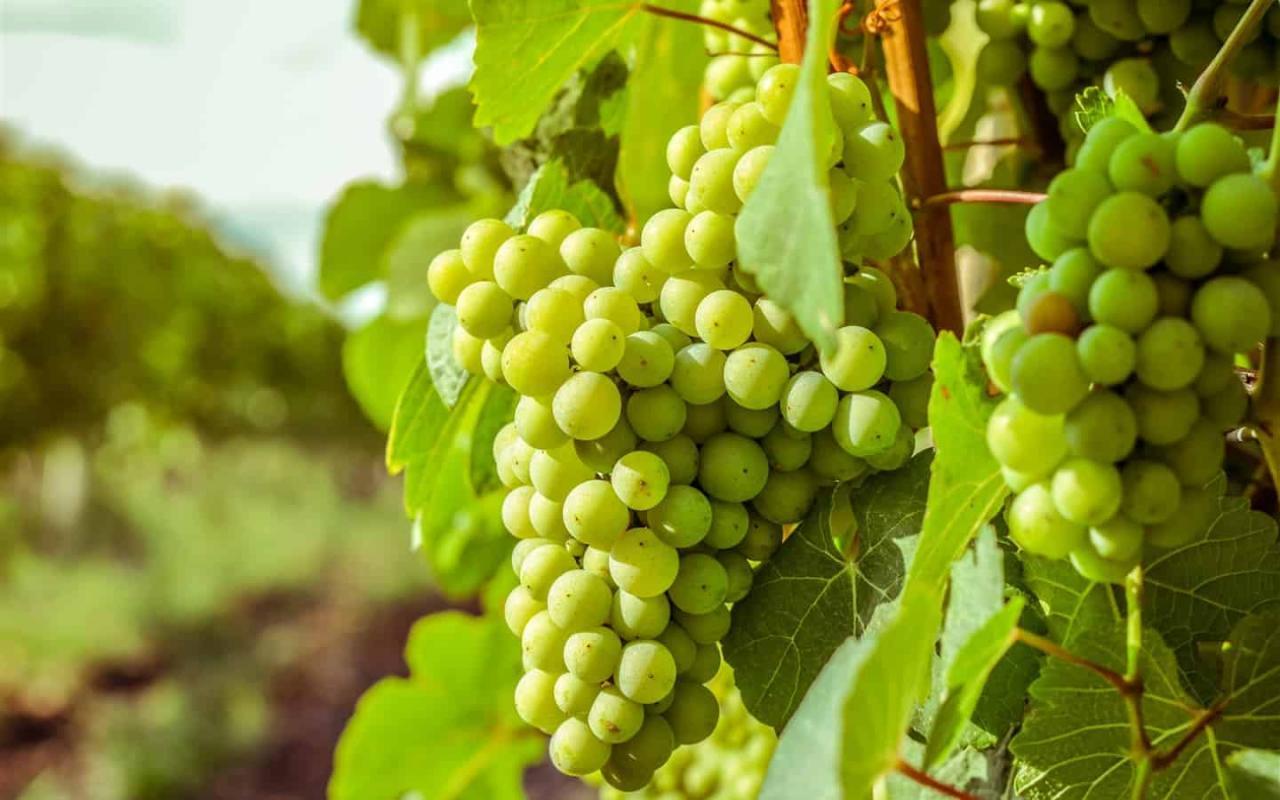 صور تفسير حلم اكل العنب الاخضر للحامل , هل اكل العنب خير في المنام