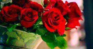 صور تفسير الاحلام الورد , هل حلم الورد جميل