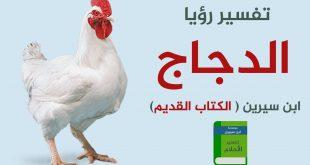 صورة تفسير الدجاجة في المنام , رؤية فراخ في الحلم وما معناها