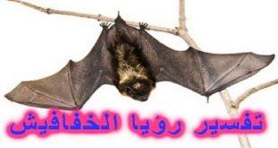 صورة الخفاش في المنام , تفسير حلم الخفافيش وما معناها