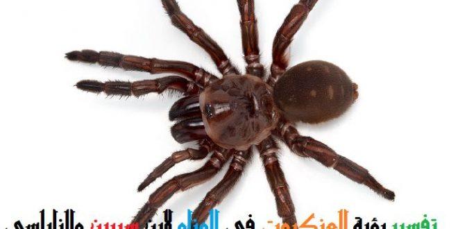 صورة تفسير حلم العناكب , شوفت عنكبوت في منامى وخايفه ايه معناه