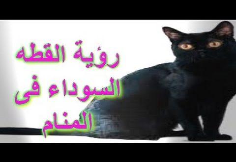 صورة تفسير رؤية قطة سوداء في المنام , حلمت انى شوفت هرة سودة ايه معناه