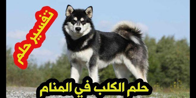 صورة الكلب في المنام , ايه معنى انى اشوف كلاب في حلمي