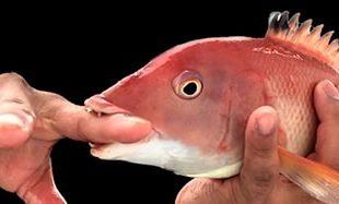 صورة تفسير حلم سمكه تعضني , شوفت سمك في الحلم يعض